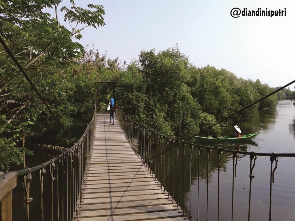 Jembatan gantung yang terdapat di Taman Wisata Alam Mangrove Jakarta Utara. (Foto:Diandini)
