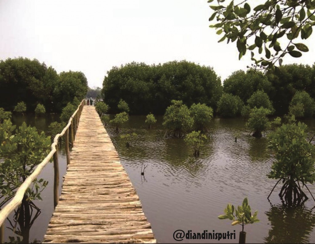 Salah satu spot di Taman Wisata Alam Mangrove Jakarta Utara.(Foto:Diandini)